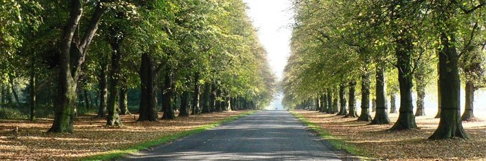 Clumber Park Tree Lined Avenue
